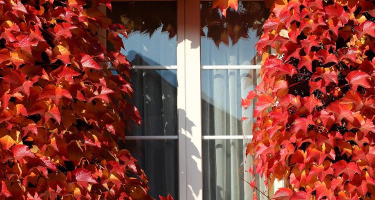 Este otoño, reduzca el gasto en calefacción mediante la instalación de láminas solares aislantes